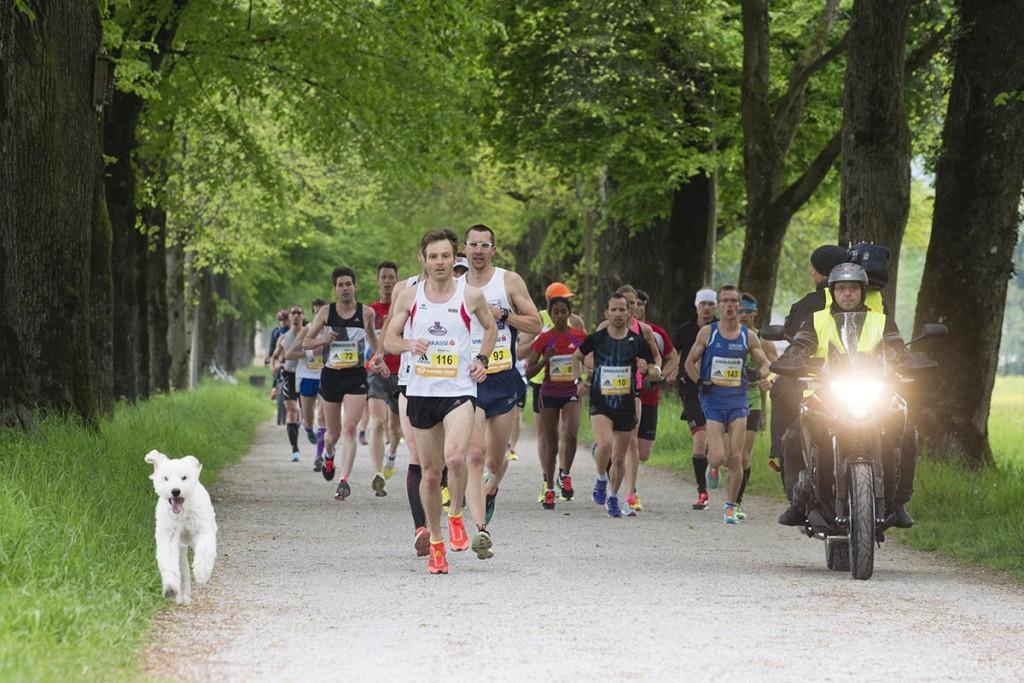 Dass Hunde bewegungsfreudig sind, beweist auch dieser Hund, der beim Salzburg Marathon 2016 einem Zuschauer entwischt ist und entlang der Hellbrunner Allee begeistert einige Hunder Meter mit dem Verfolgerfeld mitmachte. © Salzburg Marathon / Bryan Reinhart